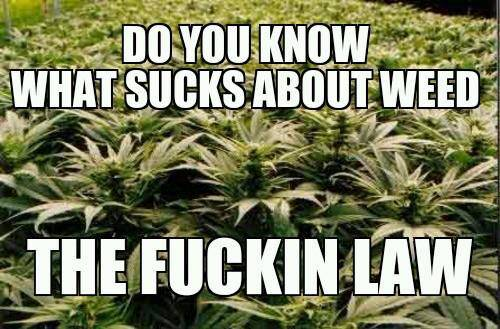 Do you know what sucks about weed? The fuckin law