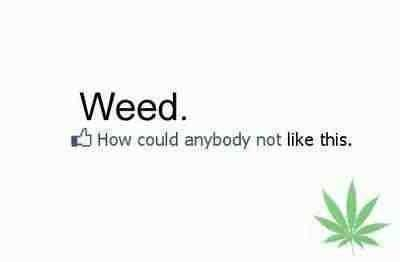 Weed. How could anybody not like this