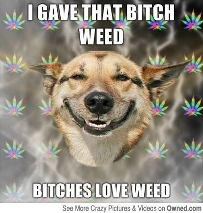I gave that bitch weed.  Bitches love weed