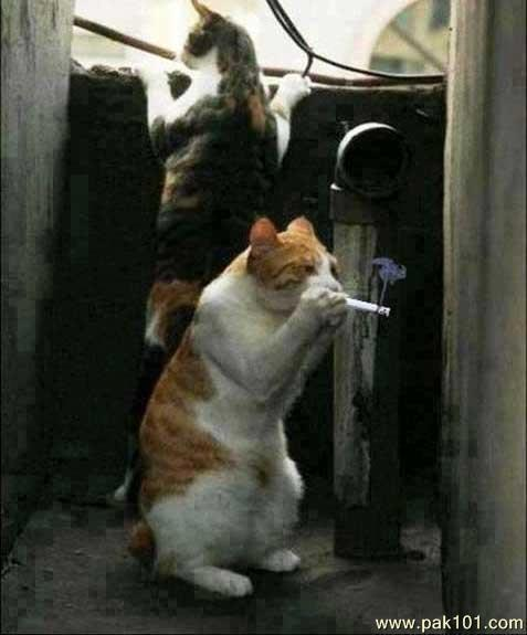 stoned cats