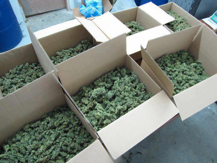 boxes of buds