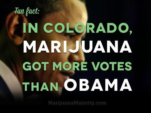 In colorado marijuana got more votes than obama