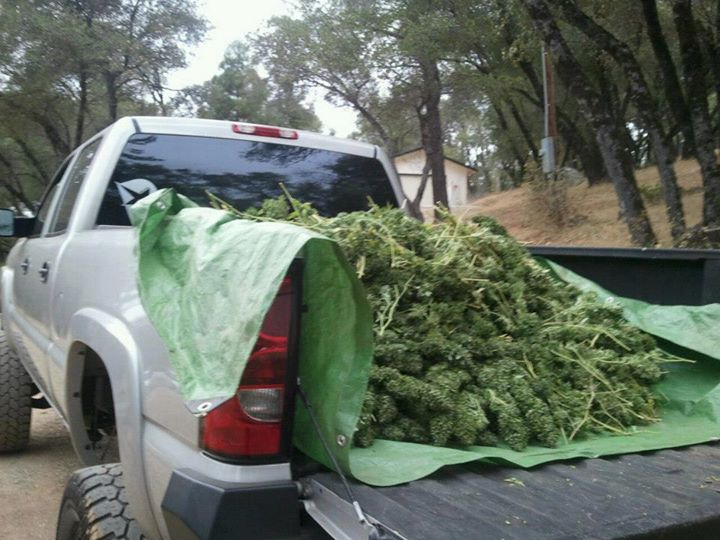 truck full of buds