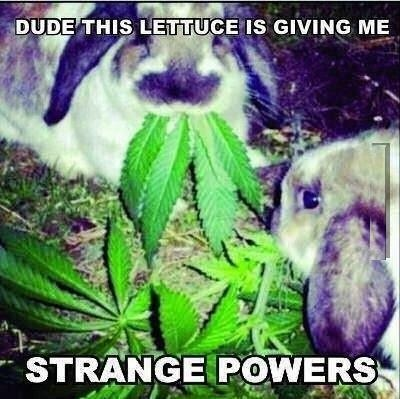 dude this lettuce is giving me strange powers