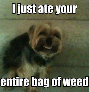 i just ate your entire bag of weed