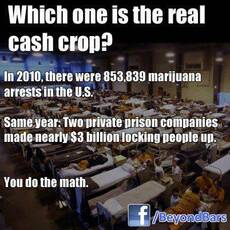 Which one is the real cash crop?