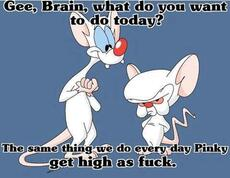 Gee brain what do you want to do today?