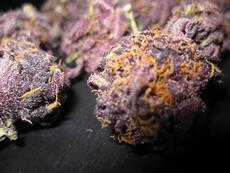 purple buds