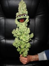 oscar the bud